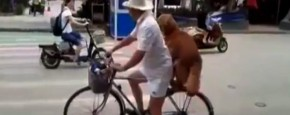 Hond Als Fietsslot