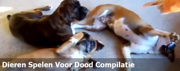 Dieren Spelen Voor Dood Compilatie