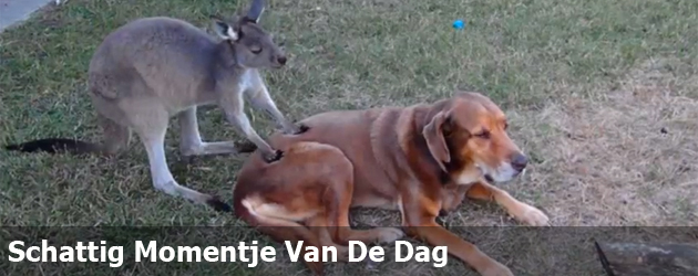 Schattig Momentje Van De Dag 