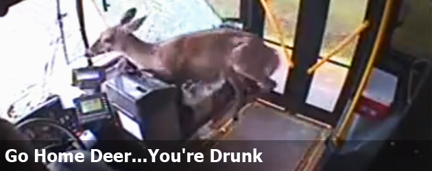 Go Home Deer...You're Drunk