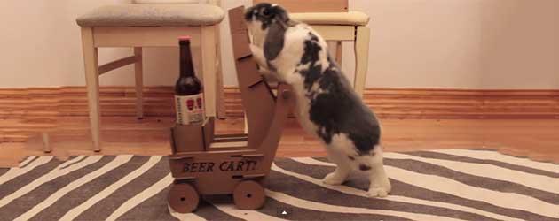 Dit Konijn Brengt Zijn Baasje Bier