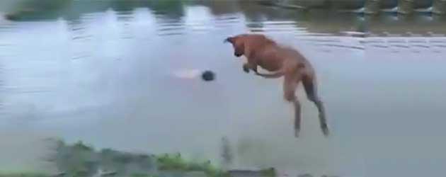 Het Bewijs Dat Je Hond Je Beste Vriend Is