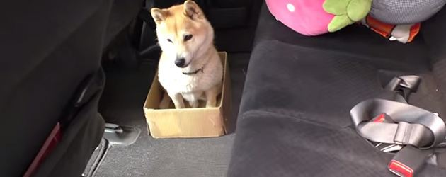 Gemeen! Hond Krijgt Steeds Kleiner Mandje