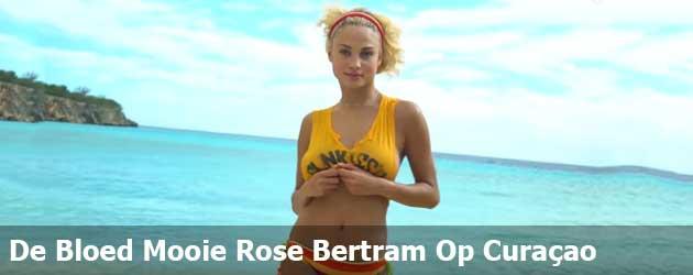 De Bloed Mooie Rose Bertram Op Curaçao