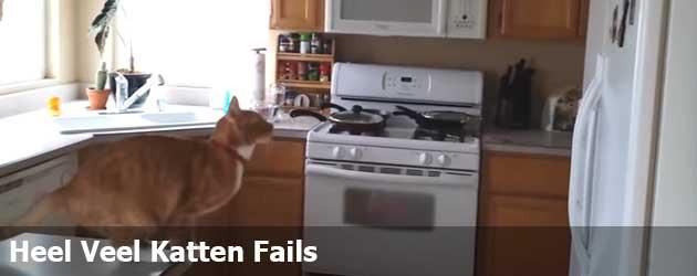 Heel Veel Katten Fails