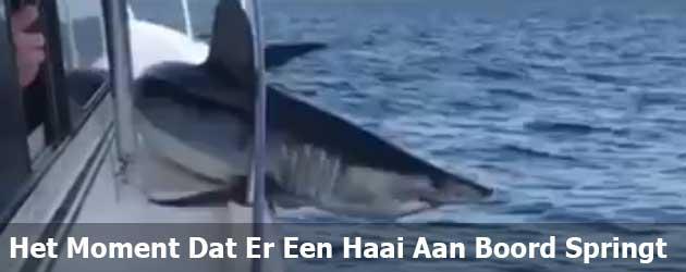 Het Moment Dat Er Een Haai Aan Boord Springt