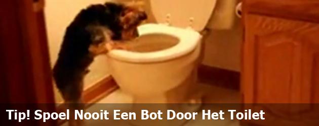 Tip! Spoel Nooit Een Bot Door Het Toilet