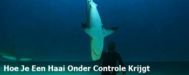 Hoe Je Een Haai Onder Controle Krijgt
