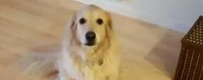 Schattig Momentje Van De Dag: Huishoudelijke Hond