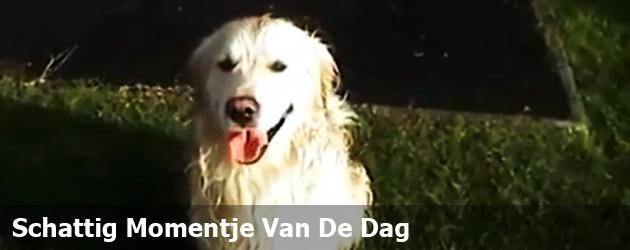 Schattig Momentje Van De Dag: Hond Op De Glijbaan