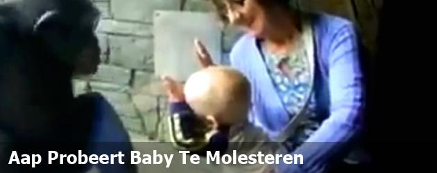 Aap Probeert Baby Te Molesteren