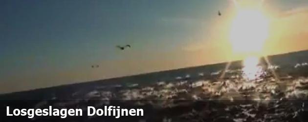 Losgeslagen Dolfijnen