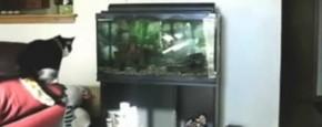Kat Vs. Aquarium
