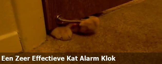 Een Zeer Effectieve Kat Alarm Klok