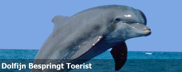 Dolfijn Bespringt Toerist