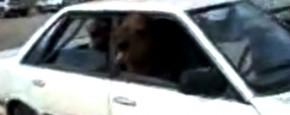 Hoeveel Kamelen Passen Er In Een Subaru?