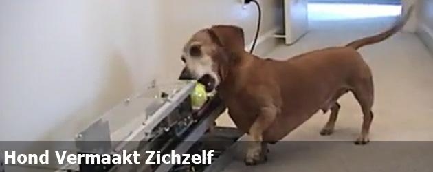 Hond Vermaakt Zichzelf