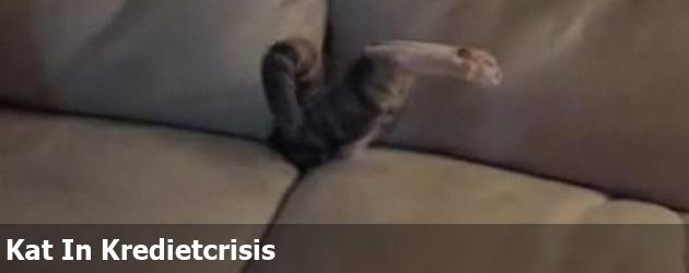 Kat In Kredietcrisis