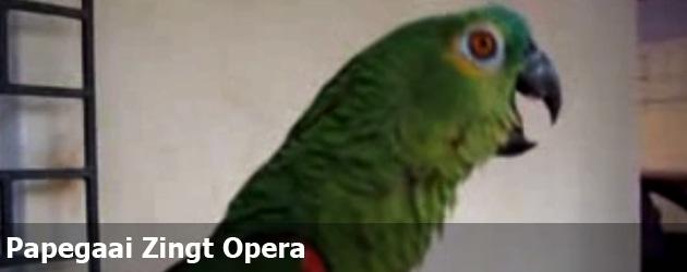 Papegaai Zingt Opera