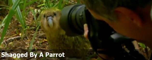 Shagged By A Parrot