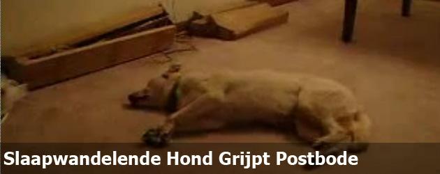 Slaapwandelende Hond Grijpt Postbode