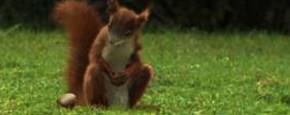 Eekhoorn Met Voetbaltalent
