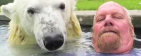 Schattig Momentje Van De Dag : Zwemmen met een ijsbeer