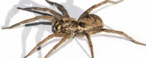 Spinnen Aan De Drugs
