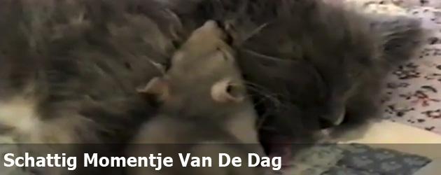 Schattig Momentje Van De Dag: Muis en Kat