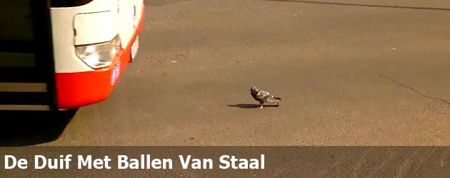 De Duif Met Ballen Van Staal