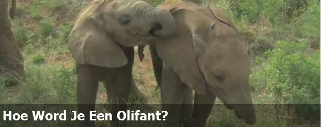 Hoe Wordt Je Een Olifant?