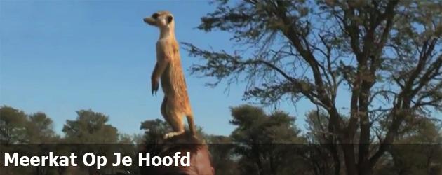 Meerkat Op Je Hoofd