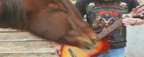 Paard Speelt Gitaar