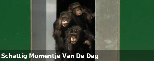 Schattig Momentje Van De Dag: chimpansees zien voor het eerst de zon