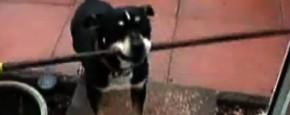 Domme Hond Past Niet Door De Deur