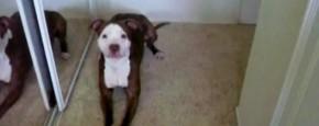 Hond Houdt Niet Van In Bad Gaan