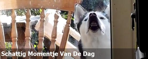Schattig Momentje Van De Dag- hond wil naar binnen