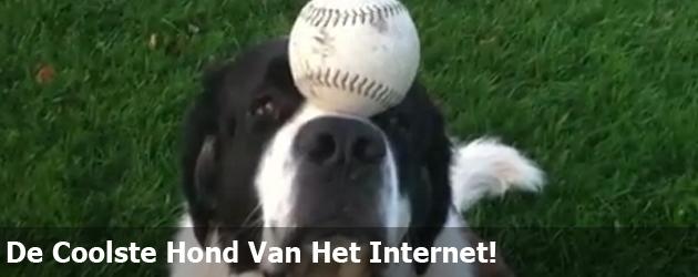 De Coolste Hond Van Het Internet!