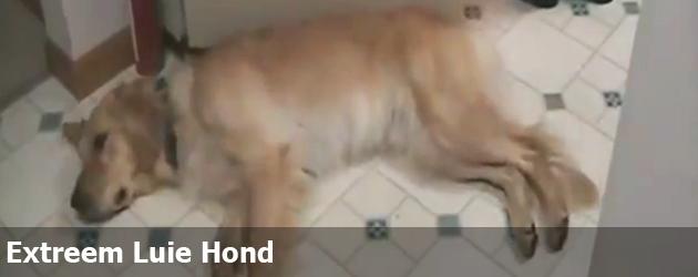 Extreem Luie Hond