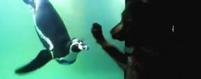 Hond Wil Graag Met Pinguin Spelen