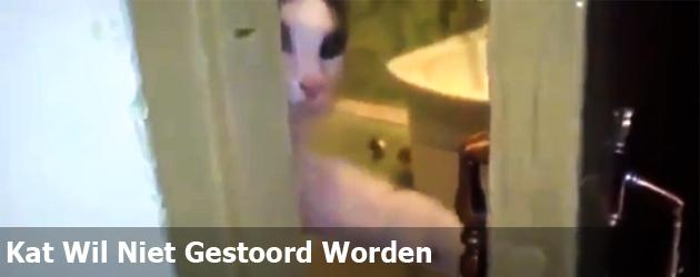Kat Wil Niet Gestoord Worden