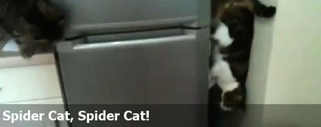 Spider Cat, Spider Cat!