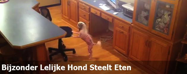 Bijzonder Lelijke Hond Steelt Eten