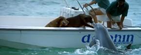 Schattig Momentje Van De Dag; dolfijn kust hond