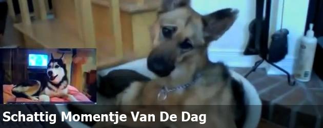 Schattig Momentje Van De Dag ; hond begrijpt er niets van
