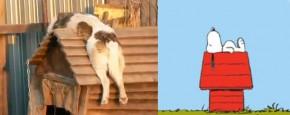 Snoopy In Het Echt