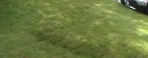Wat Gebeurt Er Als Er Water Onder Gras Komt?