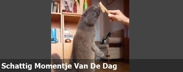 Schattig Momentje Van De Dag; kat geniet er extreem van
