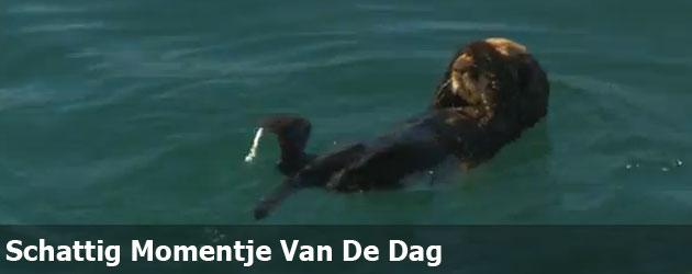 Schattig Momentje Van De Dag; otter