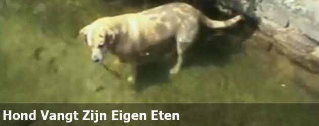 Hond Vangt Zijn Eigen Eten